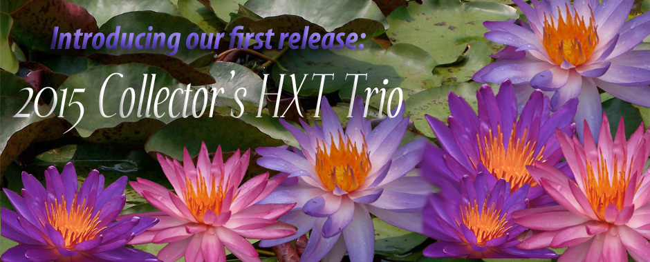 Turtle Island Waterlilies 2015 HXT Collectors Trio. Our first ISG release with a pink, purple and blue hardy water lily collection.