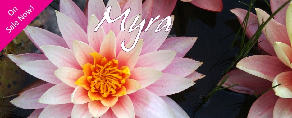 "Nymphaea 'Myra"" Exclusive Mike Giles Water Lily"