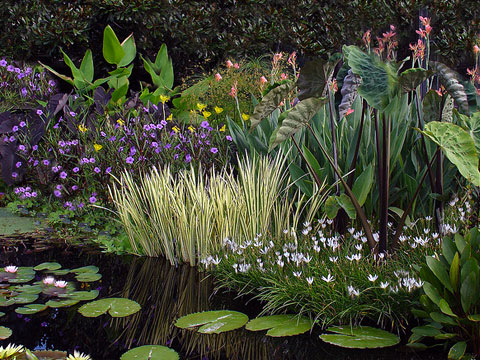 All Pond Plants