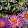 2015 Collector's HXT Trio – Hot Pink, Purple, and Blue Hardy Water Lily Trio
